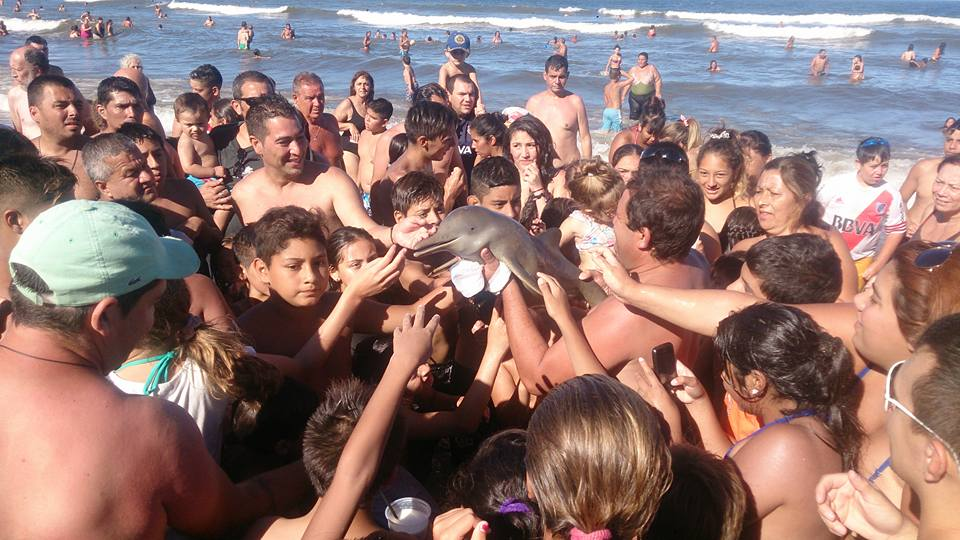 Dolphin dies from selfie, baby dolphin,