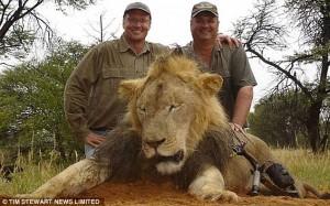 lion dentist