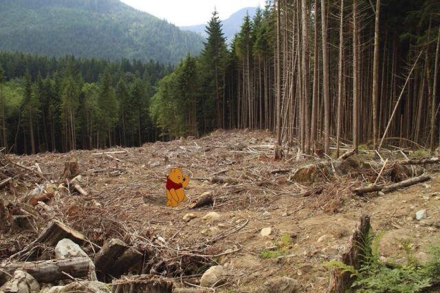 deforestation disney
