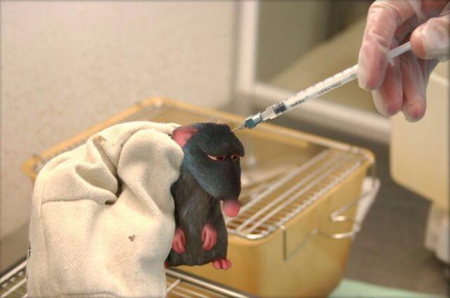 Disney rat film movie sad animal testing
